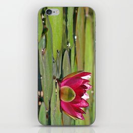 Pink Lily Pad Flower iPhone Skin