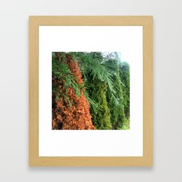 Pine Droplet Framed Art Print