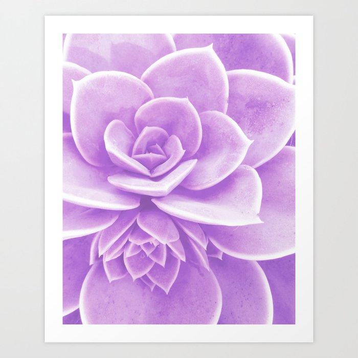 Purple Succulent Reflection Art Print