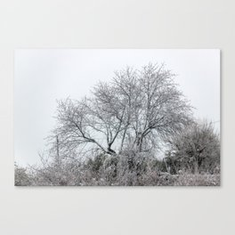 Snowy naked tree Canvas Print