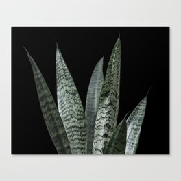 Snake plant with black Canvas Print