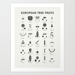 Infographic Guide for Tree Fruits, Nuts, Cones and Seeds Art Print