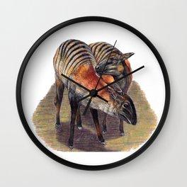 Zebra Duikers Wall Clock