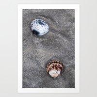Shells on the sand Art Print