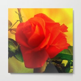 Rote Rose Metal Print