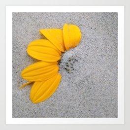 Sunflower in the Sand Art Print