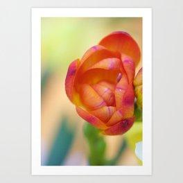 Bright orange fresia Art Print