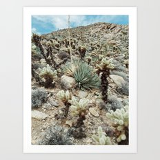 Mountain Cholla Art Print