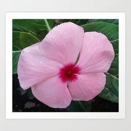 Simplicity in a Pink Flower Art Print