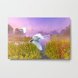 Mute Swans Over Marshes Metal Print