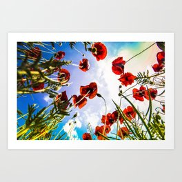 Poppies on the Sky Art Print