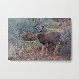 Zion Deer Metal Print