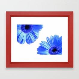 Blue Gerbera Flowers Framed Art Print