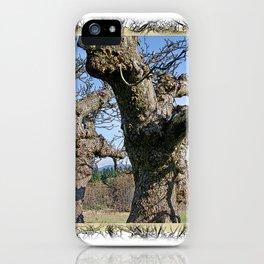OLD APPLE TREE iPhone Case