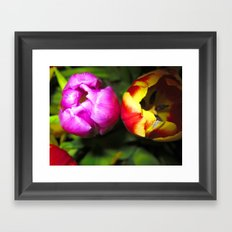 Pink and Red and Yellow Tulips Framed Art Print