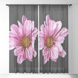 Chrysanthemum Flower Sheer Curtain