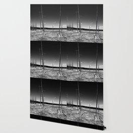 Lodgepole Pines Wallpaper