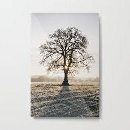 Sunrise behind a tree on a frosty morning. Norfolk, UK. Metal Print