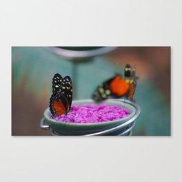 Natural Habitat Canvas Print