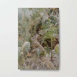 Spooked Desert Bunny Metal Print