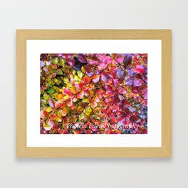 Barberry Fall Colors Framed Art Print