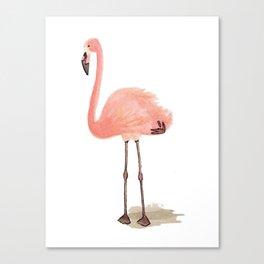 flamingo stance Canvas Print