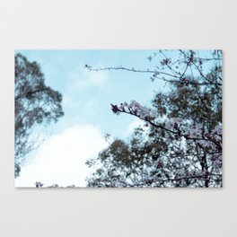 sakura blossom on the sky Canvas Print