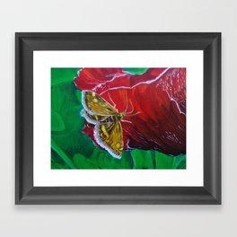 Moth on a petal Framed Art Print