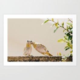 Birds Kissing Art Print