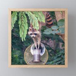 Raccoon Raiding the Bird Feeder Framed Mini Art Print