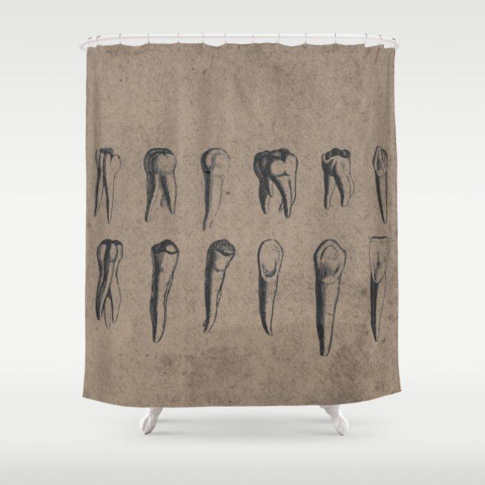 Vintage Dental Diagram Of Teeth In Black Grey Brown Shower Curtain By Madzakka