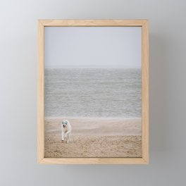Photo of a dog with glasses on the beach, Dutch Wadden Island Texel, in the world heritage of the Waddensea | Fine Art Travel Photography | Framed Mini Art Print