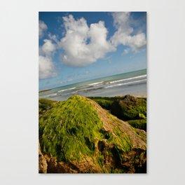 Atlantic green fur Canvas Print