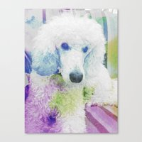 poodle Canvas Prints featuring poodle by Sarah Jane Connors