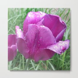 440 - Rainy day Tulip Metal Print