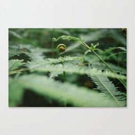 The Green Fern Canvas Print