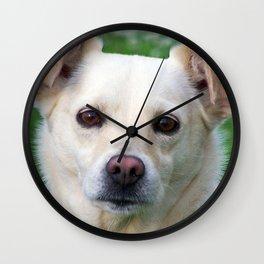 Blond dog portrait Wall Clock