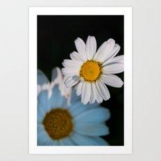 Close up daisy Art Print