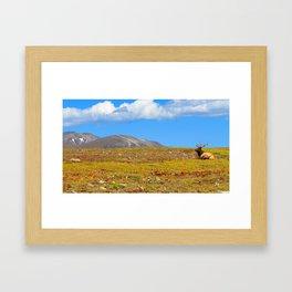 The Elk of Colorado Framed Art Print