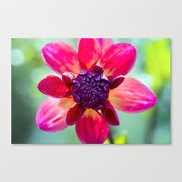 Dahlia / In The Garden / 2 Canvas Print
