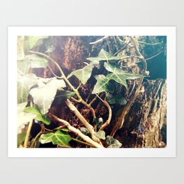Twigs Entwined Art Print