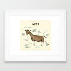 Anatomy of a Goat Framed Art Print