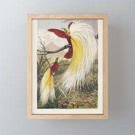 The Bird of Paradise by Benjamin Fawcett (1808-1893) two blindingly colorful birds full with feather Framed Mini Art Print