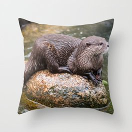 Zwergotter Throw Pillow