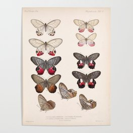 Moths And Butterfly Vintage Scientific Hand Drawn Insect Anatomy Biological Illustration Poster
