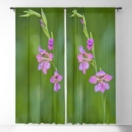 Beauty in nature, wildflower Gladiolus illyricus Blackout Curtain