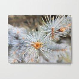 blue flower Metal Print