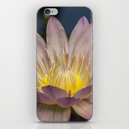 Beautiful Wateer Lily iPhone Skin