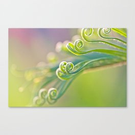 Unspoiled Canvas Print