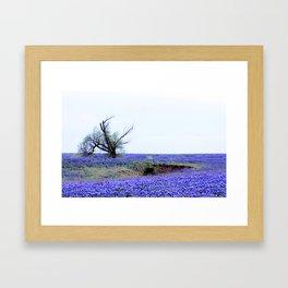 Lonely Tree & Bluebonnets Framed Art Print